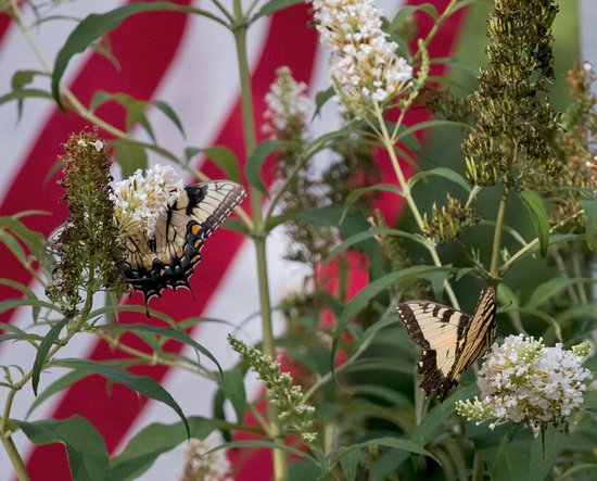 Brownsville, KY: Many of the plantings are designed to attract butterflies.