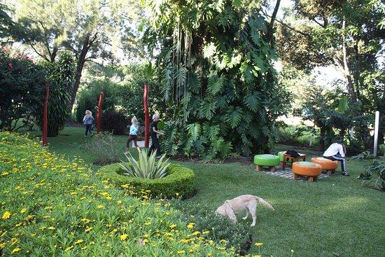 Casa Batsu: the backyard where the kids can run right off the eating area