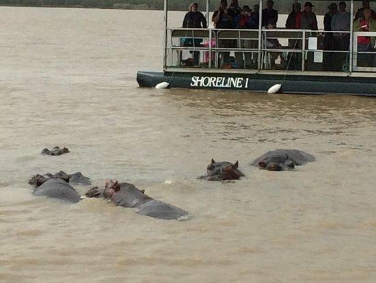 St Lucia, Νότια Αφρική: Des hippo à la pelle : nous ne pensions pas en voir autant, c'est impressionnant le nombre d'hip