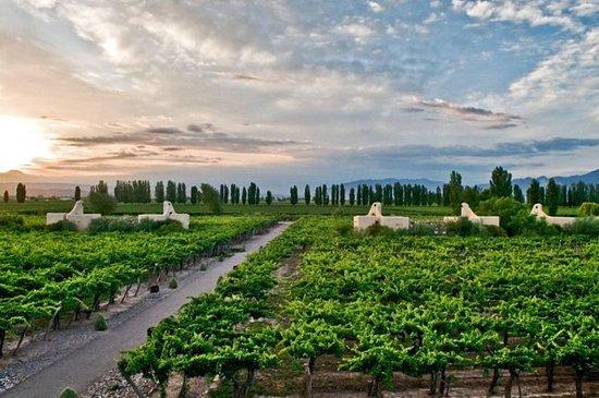 Cavas Wine Lodge: Viñedos a la distancia