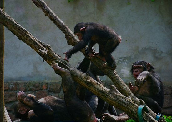 Nikolaev Zoo 사진