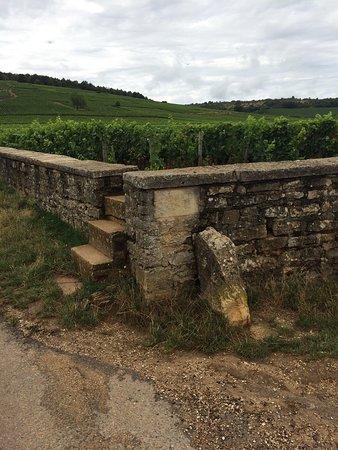Ladoix-Serrigny, Frankreich: photo1.jpg
