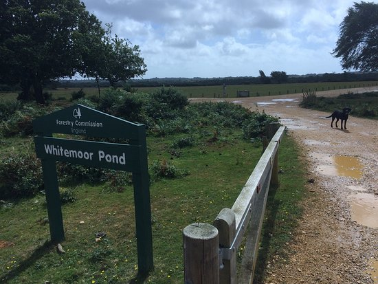 New forest car parks whitefield moor and car park - Hotels in brockenhurst with swimming pools ...