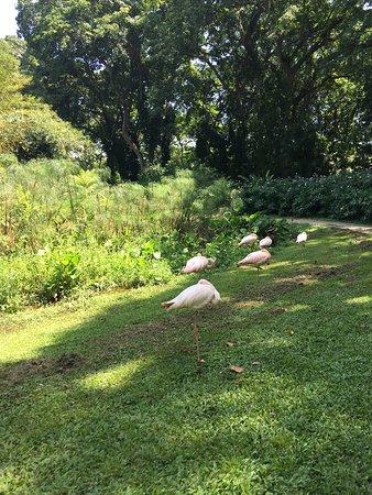San Felipe, เวเนซุเอลา: Un paseo relajado para conocer la hermosa flora exótica tropical