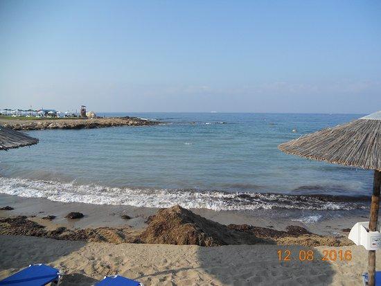 Veronica Hotel: Пляж, горы водорослей