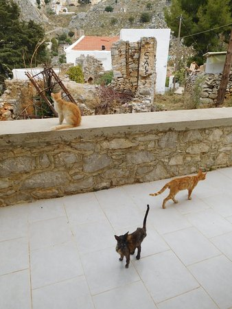 Irini Studios : room 6 patio cats