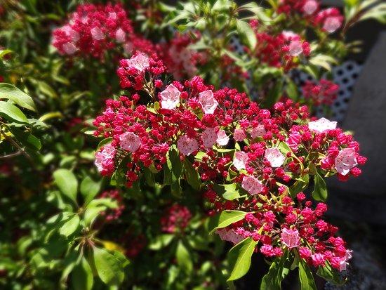 Scotch Hill Inn: Close up of flowers