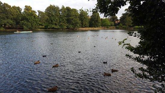 Ilford, UK: 20160820_181754_large.jpg