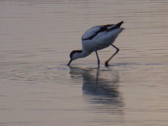 Provence, Frankrijk: Uccello acquatico