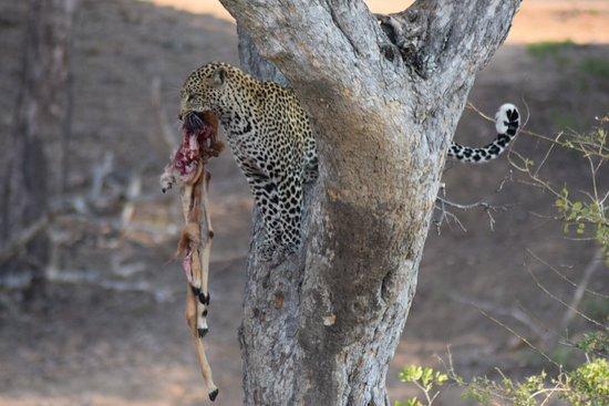 Timbavati Private Nature Reserve, South Africa: photo0.jpg
