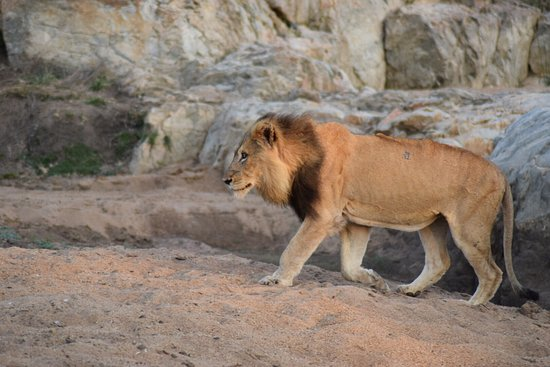 Timbavati Private Nature Reserve, South Africa: photo1.jpg