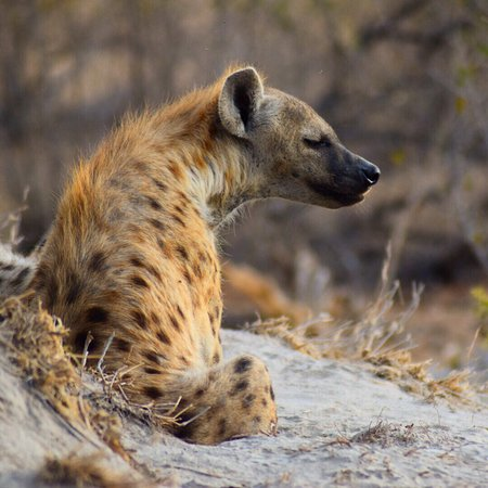 Timbavati Private Nature Reserve, South Africa: photo2.jpg