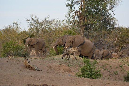 Timbavati Private Nature Reserve, Zuid-Afrika: photo4.jpg
