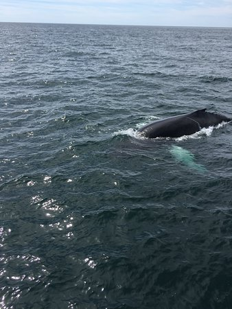 Westport, Canada: Our first whale up close!