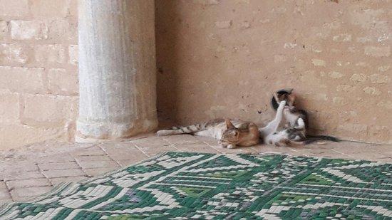 Grande Mosquée de Kairouan : 20160804_192239_large.jpg