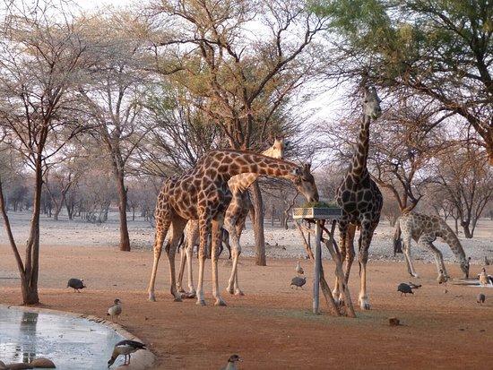 Omaruru, Namibie : 0$Images$91_113_PANAP1130591JPG_large.jpg