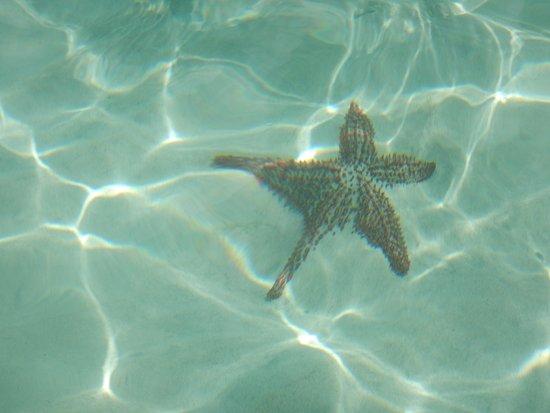 Spice Island Beach Resort ภาพถ่าย