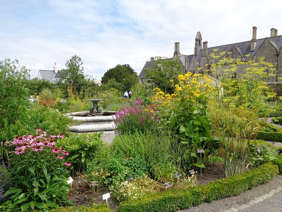 Cowbridge, UK: Looking across childberth herbs, July 2016