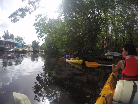 Kayak Aventure Mangrove: photo1.jpg