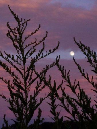 Wheatley, كندا: Taken on grounds of Wenzler's Landing