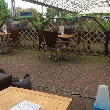 Newton Le Willows, UK: The view from the dog cafe
