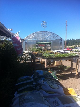Chimacum, WA: Great greenhouse and plant stands