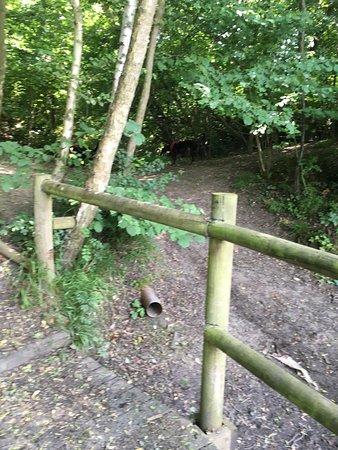 Bilde fra Beacon Wood Country Park