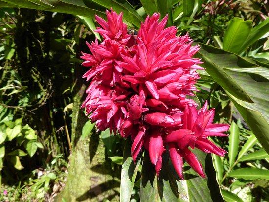 Papaikou, Havaí: flower