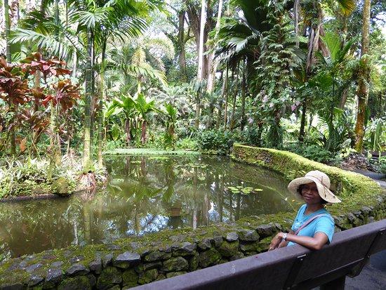 Papaikou, Havaí: Garden Pond