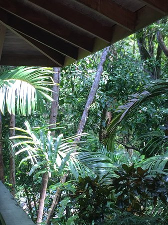 Playa Tortuga, Costa Rica: View from my patio. The forest is right there.