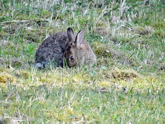 Ouderkerk aan de Amstel, เนเธอร์แลนด์: a rabbit