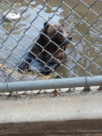 Big Bear Alpine Zoo at Moonridge: 20160820_102848_large.jpg