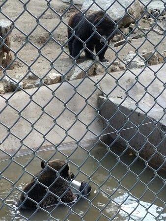 Big Bear Alpine Zoo at Moonridge 이미지