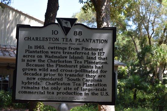 Wadmalaw Island, SC: History of the tea plantation - impressive.