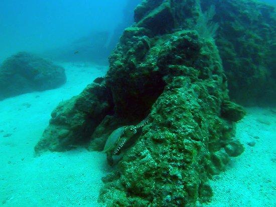 Pirate Cove: Turtle at SCUBA excursion.
