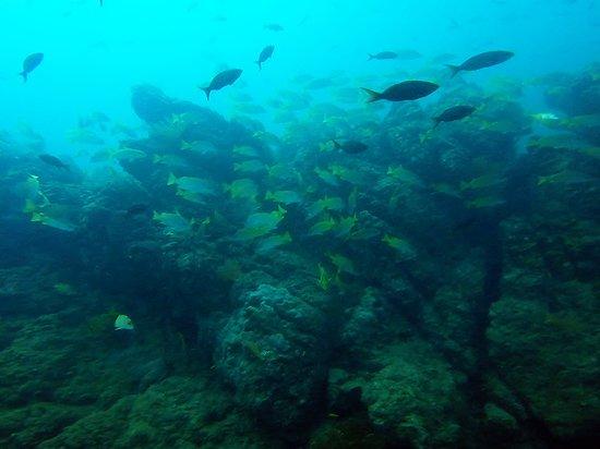 Pirate Cove: School of fish at SCUBA excursion.