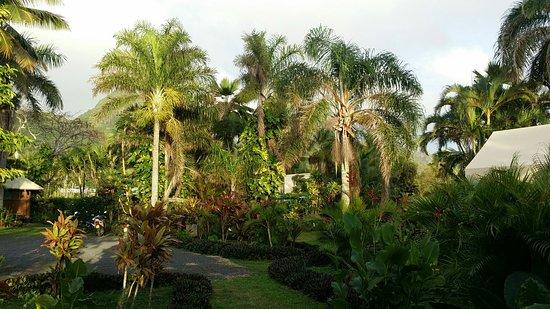 Matavera, Νήσοι Κουκ: IMG-20160810-WA0000_large.jpg