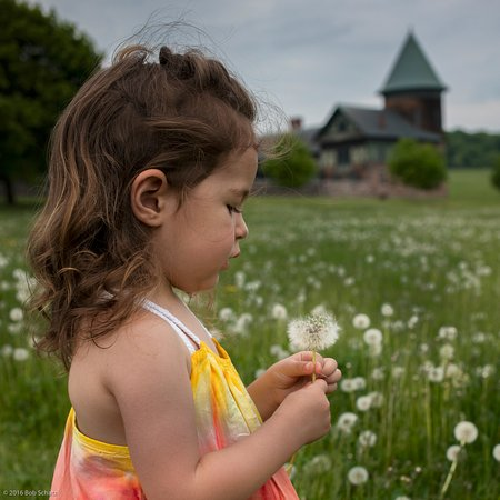 Shelburne, VT: Playing in the fields around the Farm Barn in the background.