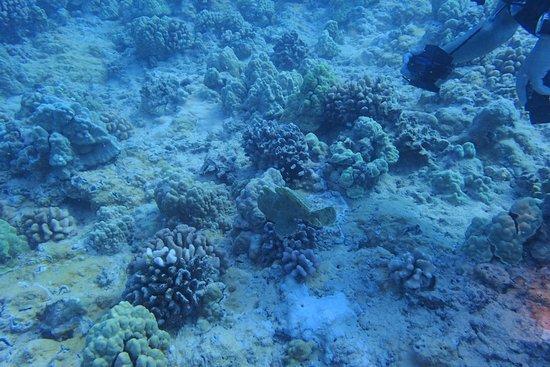 Rainbow Scuba Hawaii: fish and corals