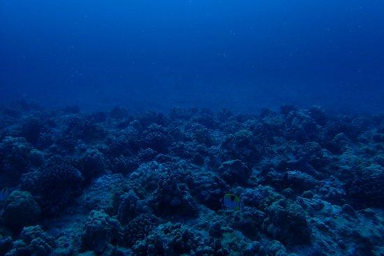 Rainbow Scuba Hawaii: corals