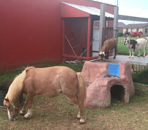 Brainerd, MN: horse & goats