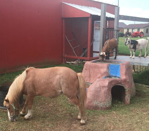 Brainerd, Μινεσότα: horse & goats