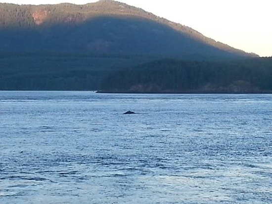 Brown's Bay Resort: The Humpback Whale we saw