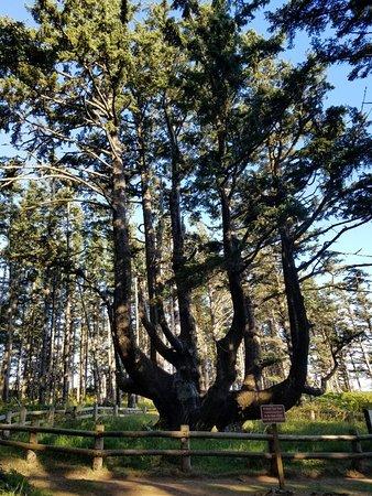 Tillamook, OR: 20160819_181437_large.jpg