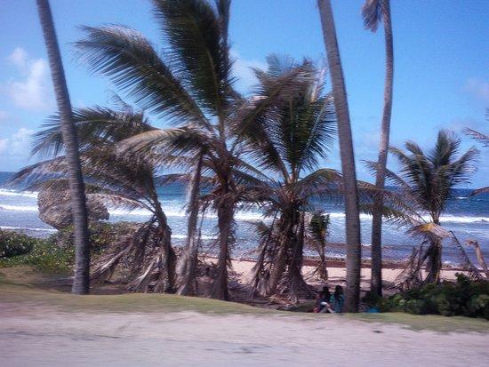 Bathsheba, Μπαρμπάντος: Enjoying the drive to the Atlantis Hotel