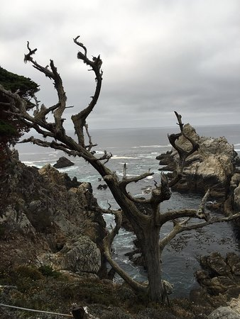 Point Lobos State Reserve: photo4.jpg