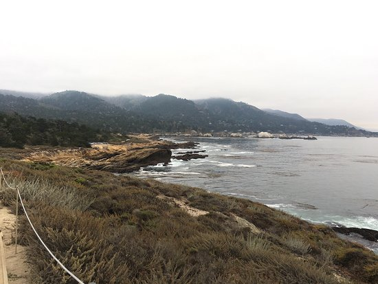 Point Lobos State Reserve: photo5.jpg