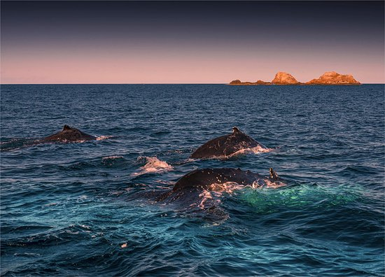 Brunswick Heads, ออสเตรเลีย: Humpback Whales, in Byron Bay NSW