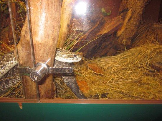 Patergassen, Oostenrijk: Uno dei serpenti nelle teche