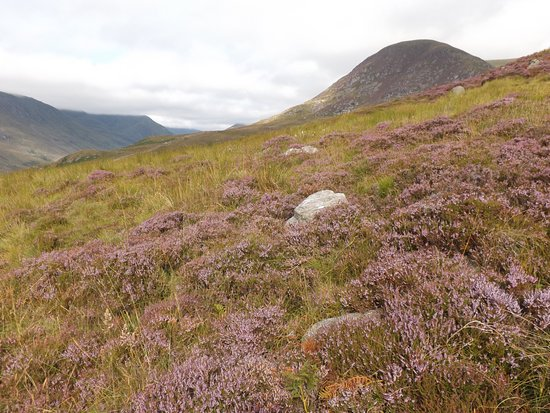 Angus, UK: Views of the glen and heather